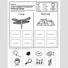 "Free Science Worksheet! Kids Love This!  ""popular Pins""  Pinterest  Worksheets For"