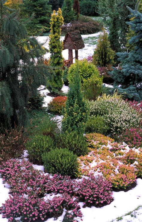 alan titchmarshs tips  growing heathers garden life
