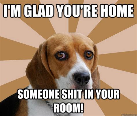 Beagle Memes - funny beagle quotes quotesgram