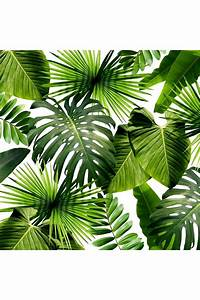 The 25+ best ideas about Tropical Leaves on Pinterest ...