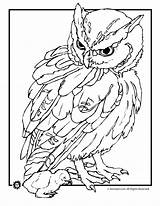 Realistic Coloring Owl Pages Animal Owls sketch template