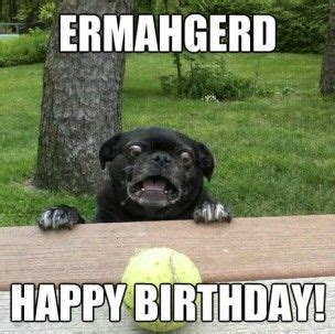 Funny Animal Birthday Memes - 1000 images about birthday on pinterest
