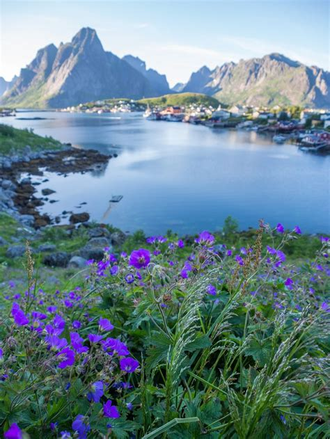 Best 25 Lofoten Ideas On Pinterest Lofoten Islands