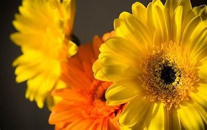 Flowers Yellow Flower Desktop Orange Wallpapers Colourful
