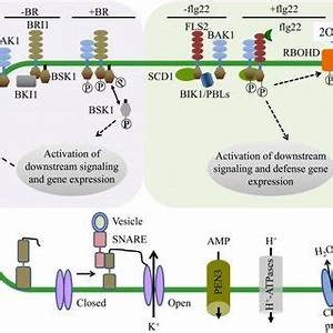 Overview of typical plasma membrane proteomics experiments ...
