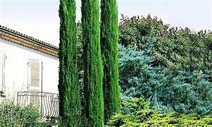 Säulen Pflanzen Winterhart : immergr nes pflanzenset groupon goods ~ Frokenaadalensverden.com Haus und Dekorationen
