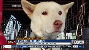 Las vegas dog survives 16 days in desert fox 4 now wftx for Dog days las vegas
