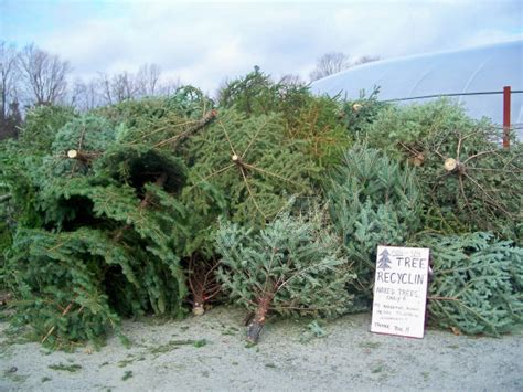 where to recycle your christmas tree in portland