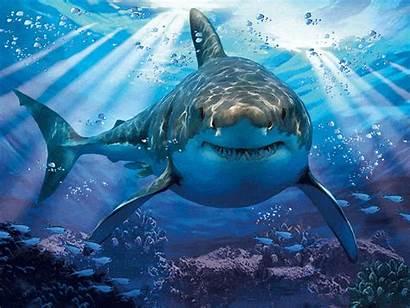 Shark 1000pcs Similar Abstract Sea κωδικός Gr
