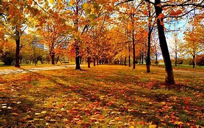 Autumn Leaves Park Sunset