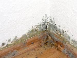 Luftfeuchtigkeit In Der Wohnung : keine chance f r schimmel in der wohnung ~ Lizthompson.info Haus und Dekorationen