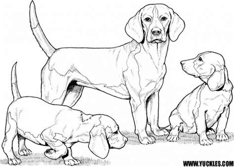 cocker spaniel mama puppies coloring page  coloring pages