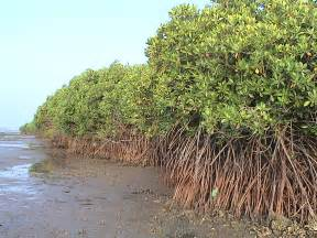 Mangroves Related Keywords & Suggestions - Mangroves Long Tail