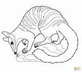 Coloring Wombat Pages Numbat Uluru Drawing Australia Sydney Ayers Rock Opera Drawings Template Colorings Printable Sketch Templates Getdrawings Main Getcolorings sketch template