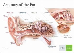 Hearing Test