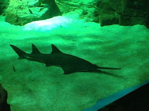 l aquarium une sortie pour les petits maman poussinou lifestyle pr 232 s de marseille