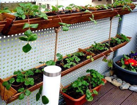 Erdbeeren Pflanzen In Diy Containers So Gehts by Erdbeeren Pflanzen In Diy Containers So Geht S