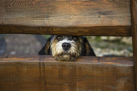 Zaun Hundesicher Machen by Hundezaun Alle Bekannten Hundez 228 Une Vorgestellt Und Erkl 228 Rt