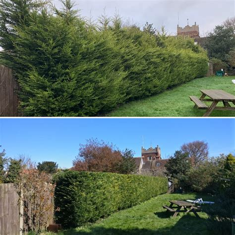 Hedge Reductions, Reasons to seek help from a professional
