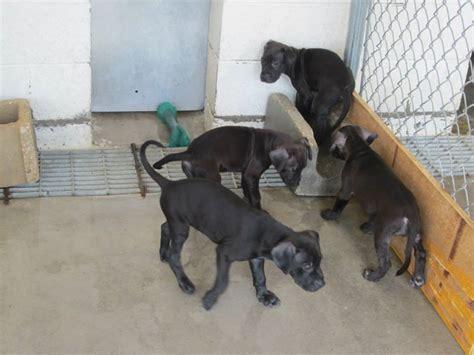lynn haven animal shelter panama city florida animal