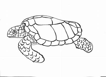Turtle Coloring Sea Pages Drawing Printable Outline