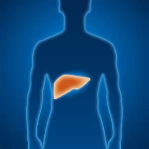 What is hepatitis B? Hepatitis