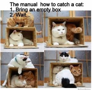 how to catch a cat weknowmemes