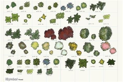 vectorworks plants plant symbols pinterest plants