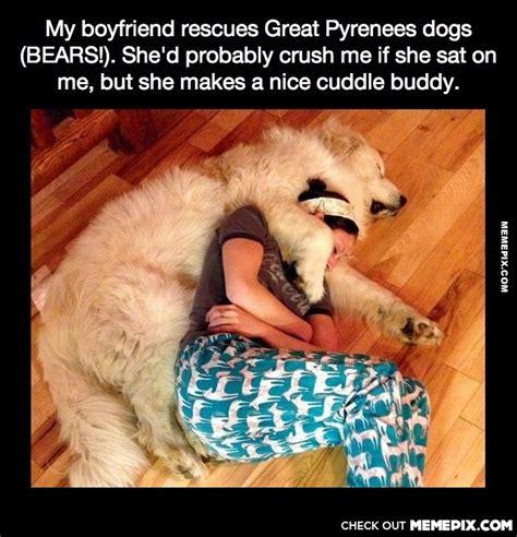 Cuddle Meme - cuddle buddy memes image memes at relatably com