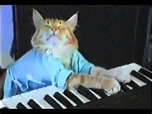 cat keyboard welcome to memespp