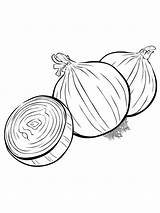 Onion Coloring Pages Colouring Vegetables Must Printable Picolour Colors Popular Recommended sketch template