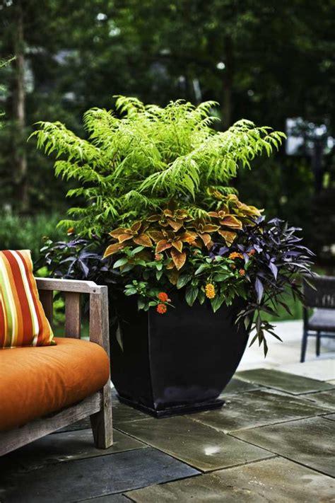 plante pour pot exterieur plante pour pot exterieur 28 images location de plantes pot cache pot ext 233 rieur et