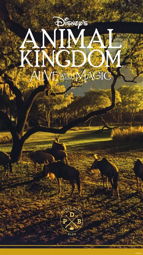 Disney Animal Kingdom Wallpaper - disney s animal kingdom nighttime inspired wallpaper