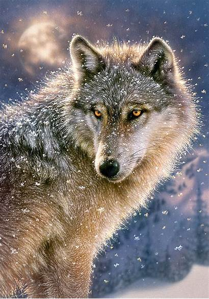 Wolf Lone Jigsaw Puzzle Pieces Wolves Castorland