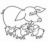 Pig Coloring Pages Baby Pigs Outline Guinea Mother Drawing Printable Cute Colouring Valentine Pot Realistic Mammals Animals Bellied Getdrawings Supercoloring sketch template