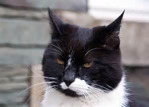 black cat white cat tt22e photographs