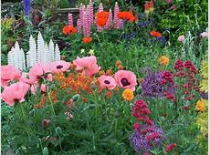 English Cottage Garden Flowers wwwpixsharkcom Images
