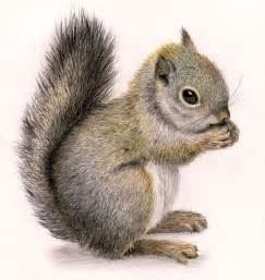 wholesale wedding decorations best 25 squirrel ideas on squirrel squirrel illustration and drawings