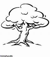 Tree Oak Coloring Drawing sketch template