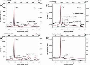 Point Raman Spectra For  A  Pig And  B  Human Milk Teeth