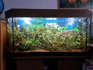 L Form Aquarium : panorama aquarium neu und gebraucht kaufen bei ~ Sanjose-hotels-ca.com Haus und Dekorationen