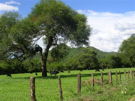 Región Centro De Argentina Villamontes Gran Chaco Ecosistema Fauna Y Turismo