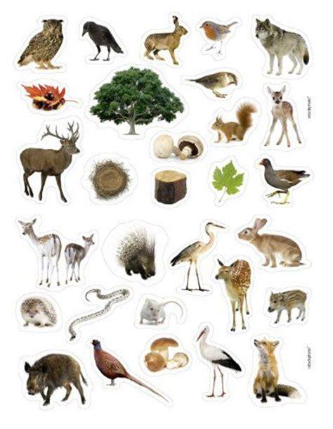 animaux de la for 234 t apprendre animaux