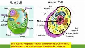 Cells  U2013 San Jos U00e9 Bilingual Blog