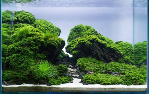 aquascaping ideas 100 aquascape ideas meowlogy