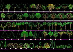 Trees and Shrubs 2D DWG Elevation for AutoCAD • Designs CAD