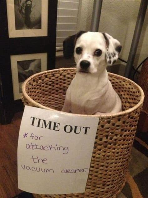 hilarious dog shaming pictures