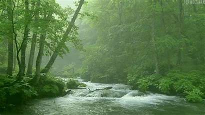 Rainforest Forest Hippie Deforestation Gypsy Save Forests