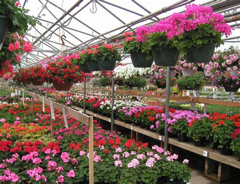 echter s nursery garden center