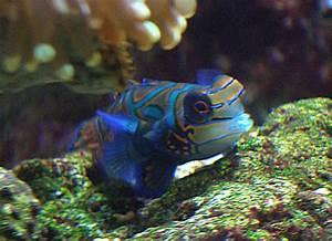 Tiere Für Aquarium : das aquarium blubber ~ Lizthompson.info Haus und Dekorationen